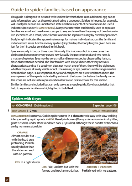 Britain's Spiders - first page of guide to families