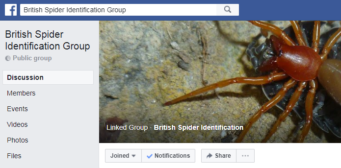 British Spider Identification Facebook Group