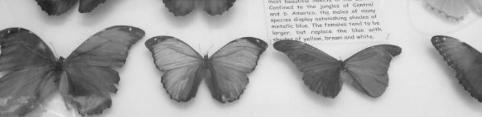 Engaging butterfly collection at World Museum Liverpool.  C Bell