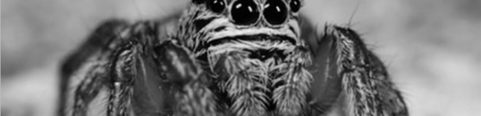 From British Spider's cover