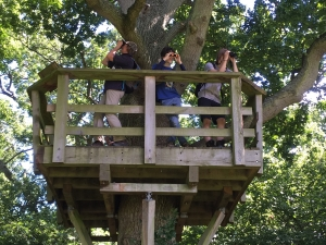 Treetop viewing platform